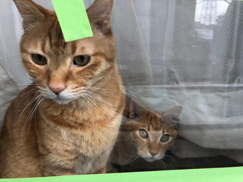 塗装を見守る猫