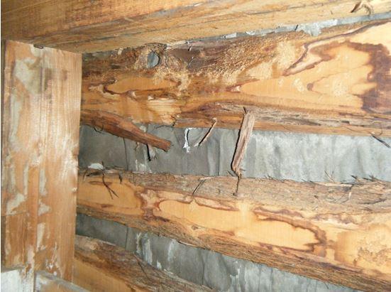 腐食した内壁木材